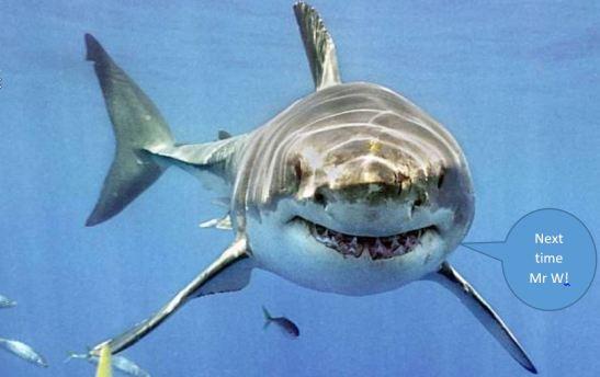 9 bb shark